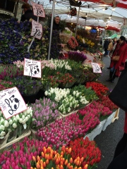 Columbia Flower market. It was so nice to see some color after all the gray days